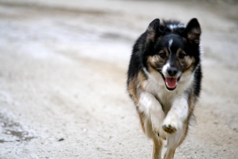Tucker running fast!