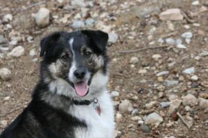 Tucker-Mascot_Kate