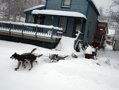 The dogs and their handler using the not-so-recently shoveled path.